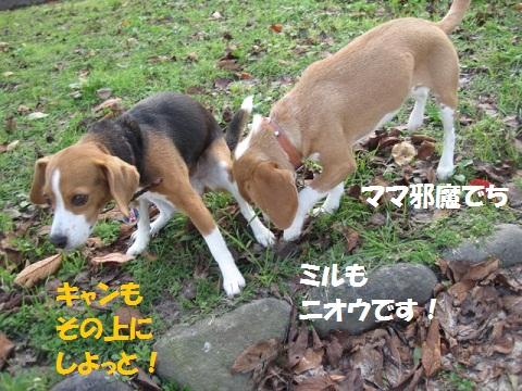 037_20111124064132.jpg