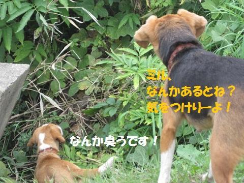038_20111115074201.jpg