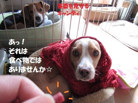 040_20111225083338.jpg