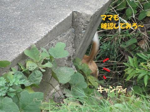 041_20111115074200.jpg