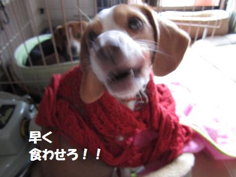 041_20111225083337.jpg