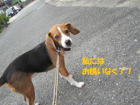 045_20110929174521.jpg