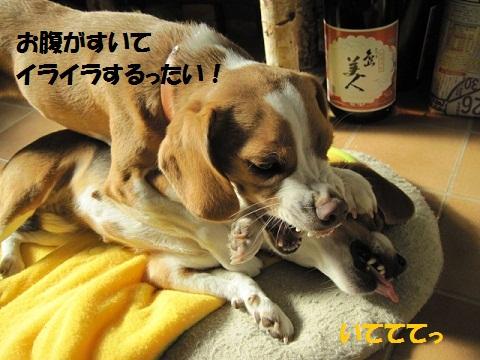 048_20111128071424.jpg