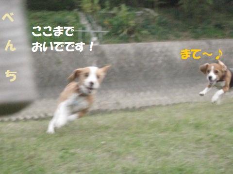 048_20111206081706.jpg