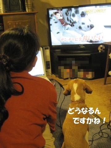 054_20111016073301.jpg
