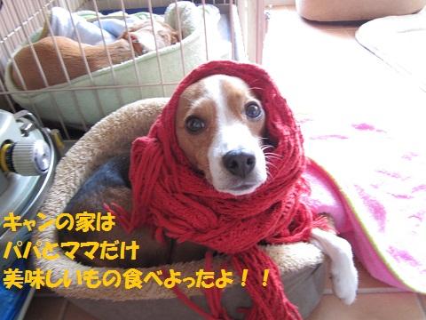 054_20111225083336.jpg