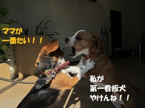 063_20120109184427.jpg