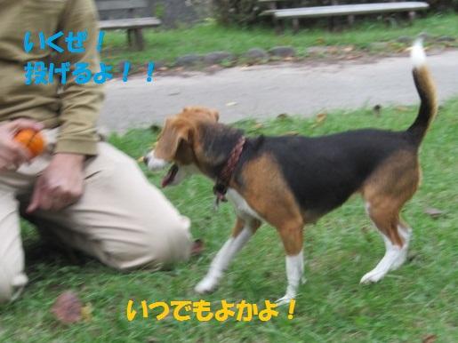 066_20111004070009.jpg