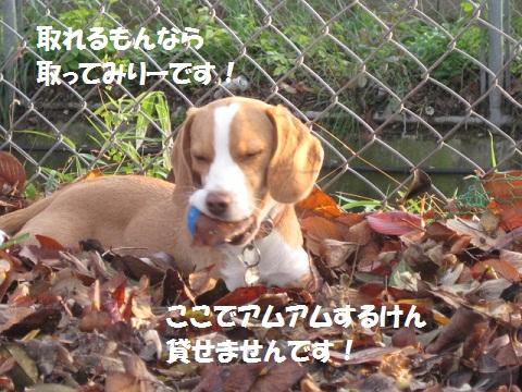 072-1_20111210081649.jpg