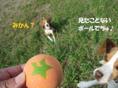 078_20111017080501.jpg