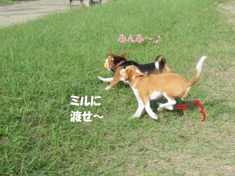 085_20111017080500.jpg