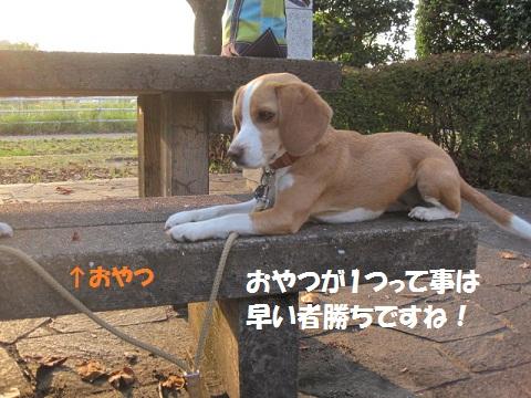 086_20111020074908.jpg