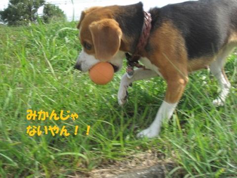 087_20111017080459.jpg