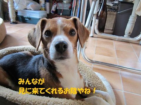 093_20120106064126.jpg