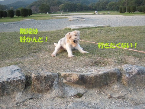 122_20111014072339.jpg