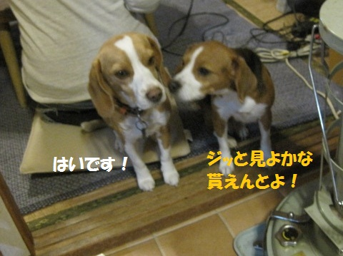 125_20111203074315.jpg