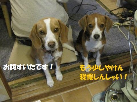 129_20111203074316.jpg