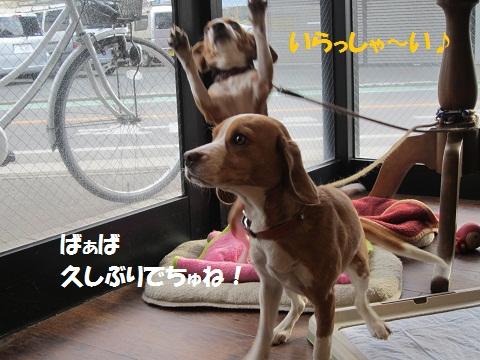 129_20120218072301.jpg