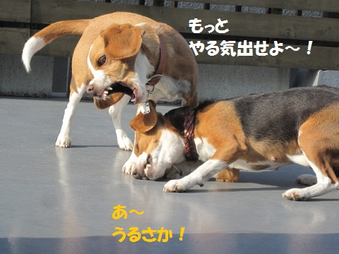 Image998_57.jpg