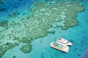 reef1.jpg