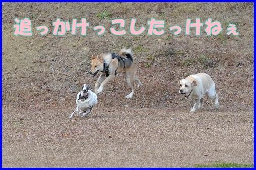 DSC_0861_20111226024641.jpg