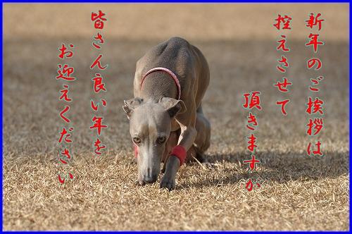 DSC_0926_20111226025047.jpg