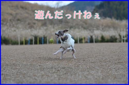 DSC_1027_20111226024933.jpg