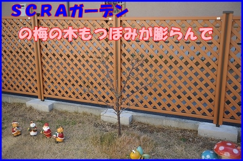 DSC_1099_20120112223451.jpg