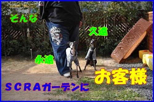 DSC_1106_20120112223452.jpg