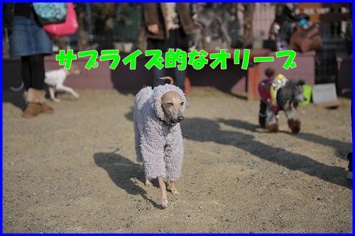 DSC_1115_20120112223956.jpg