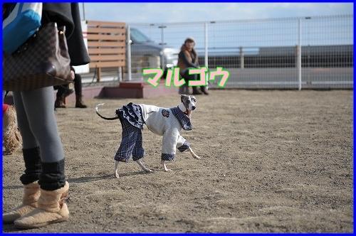 DSC_1118_20120112224000.jpg