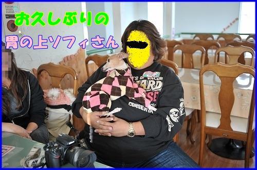 DSC_1130_20120112224227.jpg