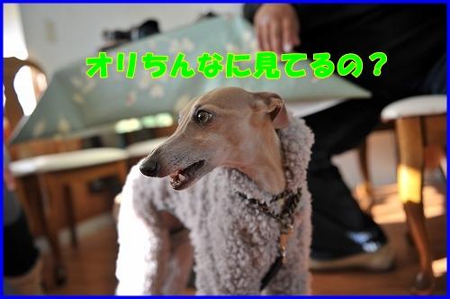 DSC_1139_20120112224227.jpg