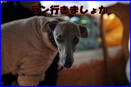 DSC_1140_20120112224320.jpg