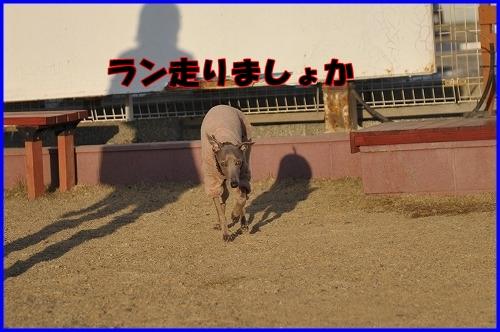 DSC_1141_20120112224321.jpg