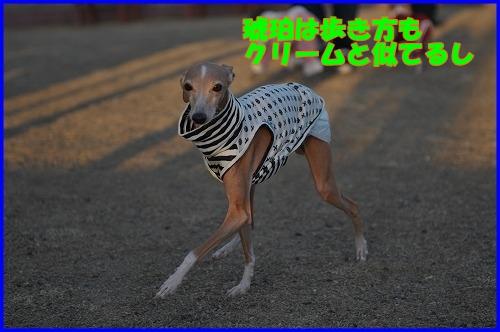 DSC_1189_20120112223956.jpg