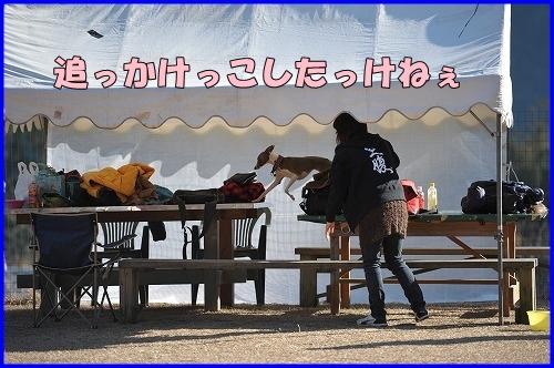 DSC_1271_20120112230504.jpg