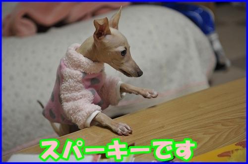 DSC_1568.jpg