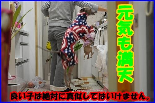 DSC_1596_20120117194110.jpg