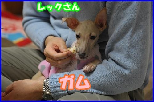 DSC_1600.jpg