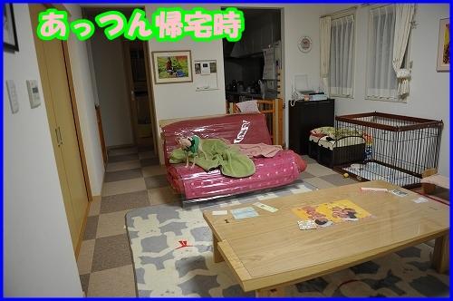 DSC_1737_20120128012311.jpg