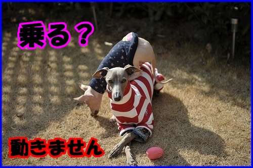 DSC_1963_20120206024047.jpg