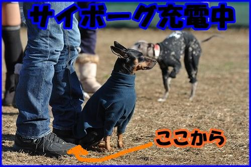 DSC_2134_20120215000129.jpg