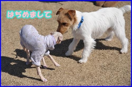 DSC_2206_20120222005551.jpg
