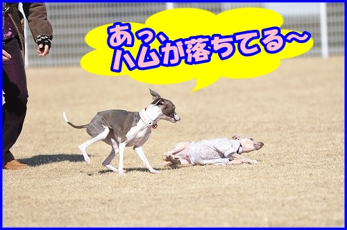 DSC_2277.jpg