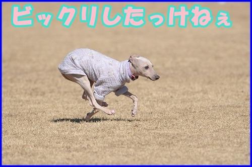DSC_2279_20120222005815.jpg