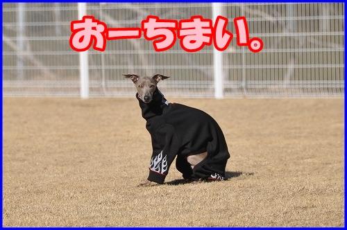 DSC_2438_20120222010111.jpg