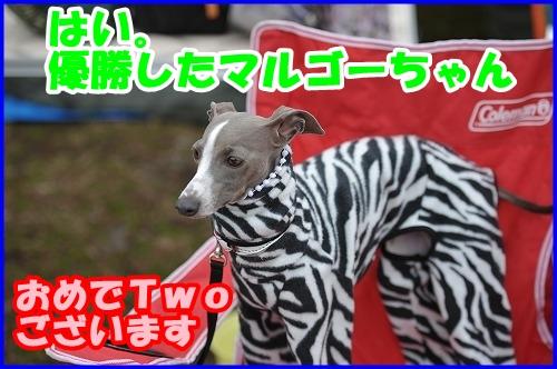 DSC_2458_20120229000043.jpg