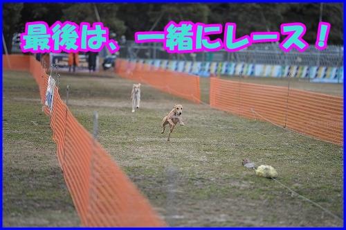 DSC_2608_20120229000442.jpg