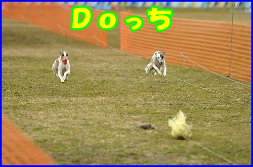 DSC_2610.jpg